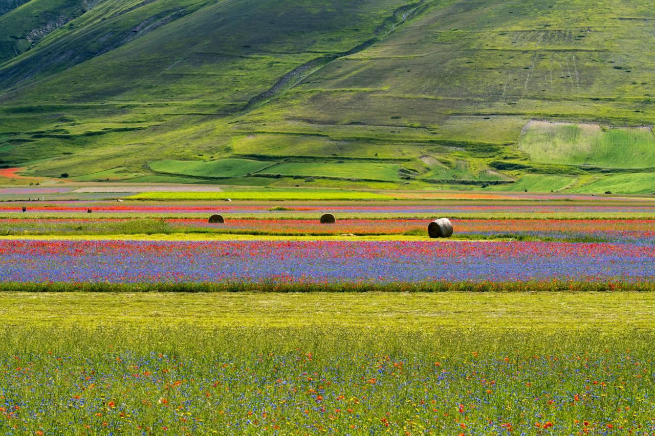 Assisi e la fioritura di Castelluccio di Norcia
