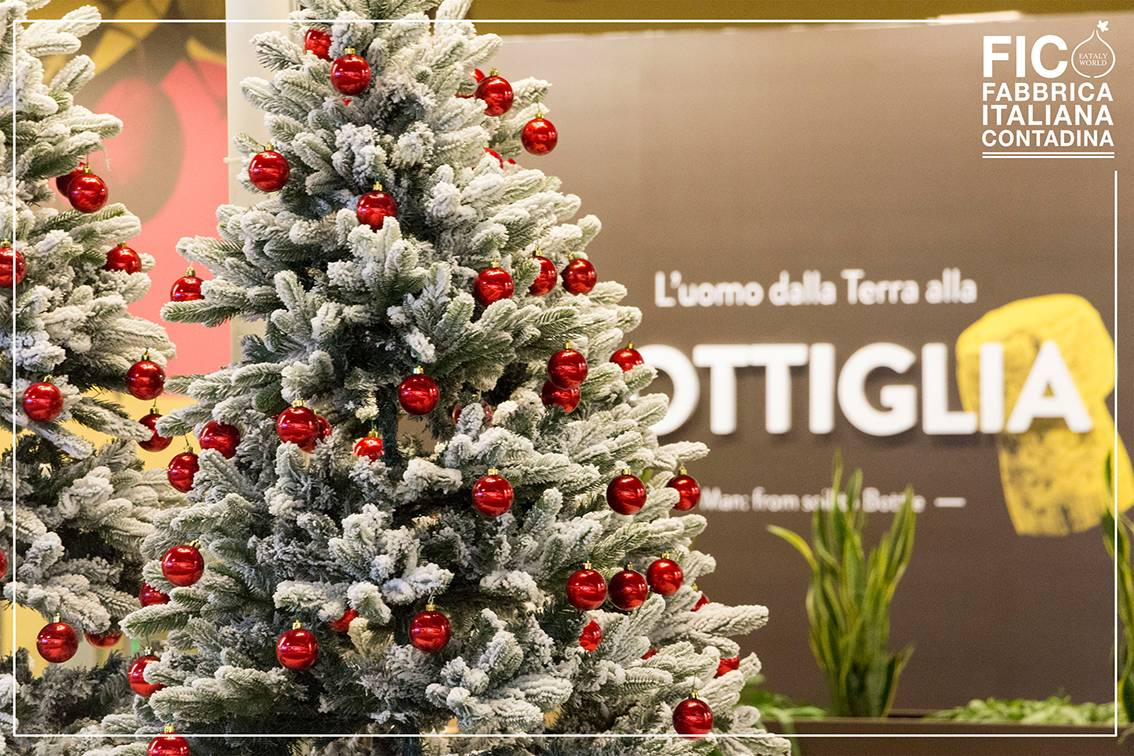 Colori e sapori del Natale  a Bologna